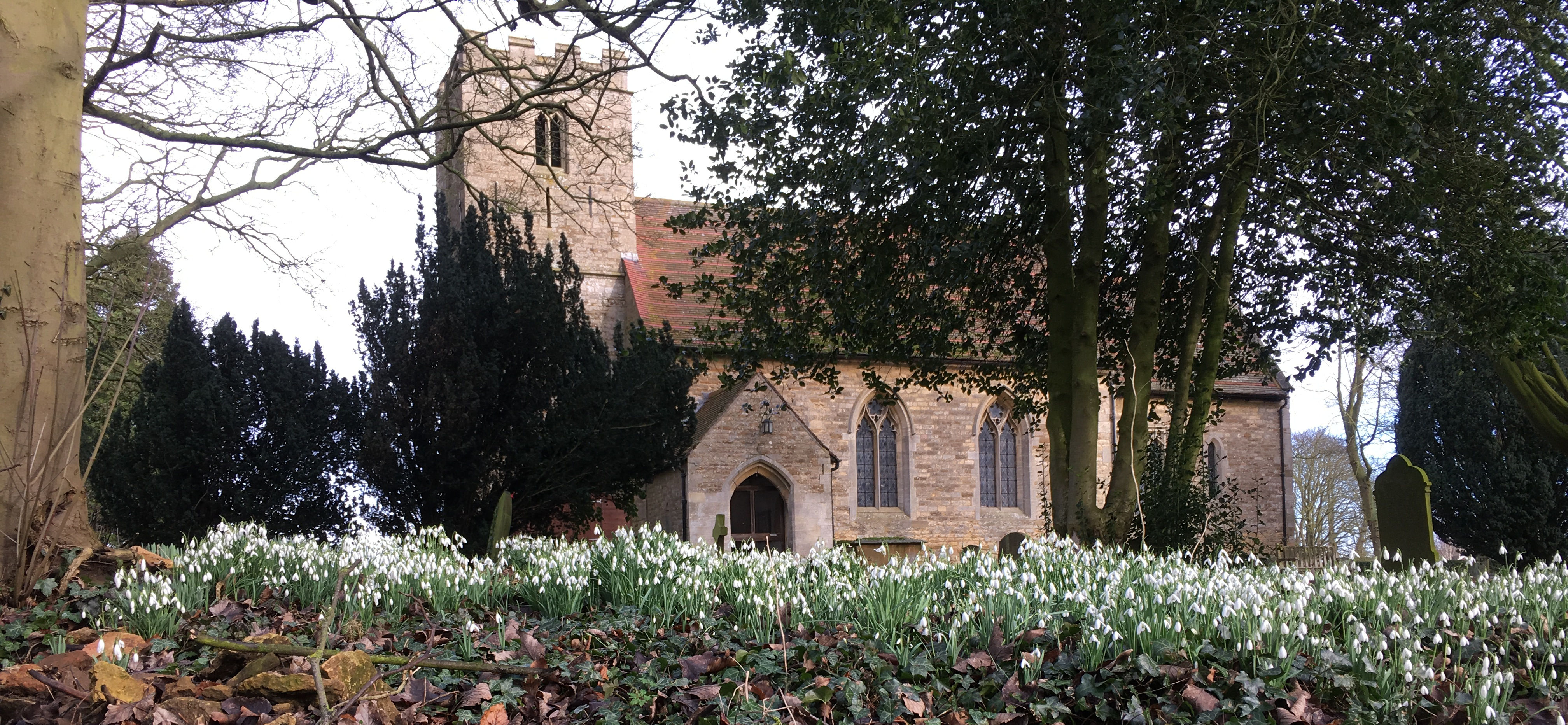 A walk around the churchyard in late February reveals swaythes of snowdrops and aconites...Yes spring is on its way.