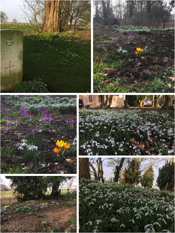 With the very mild weather during the third week of February the snowdrops, aconites and crucus are doing their thing and the churchyard is filling with colour to herald the forthcoming Spring.